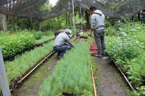 AMSCLAE y MAGA entregan 2320 plántulas para reforestar zonas de recarga hídrica