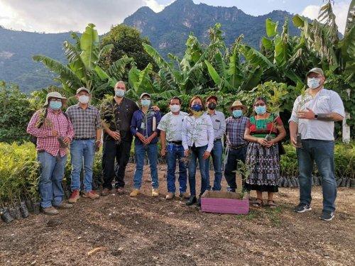 Alianza interinstitucional beneficiará a plantaciones de café en San Juan la Laguna