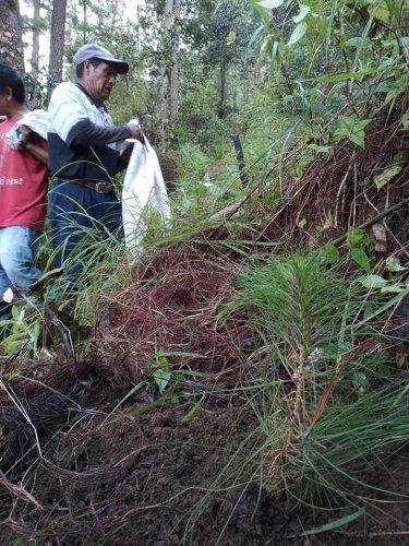 AMSCLAE y Municipalidad de Nahualá reforestan parte alta de la cuenca