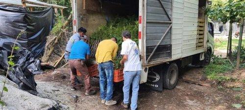 Donación de plántulas contribuirá al aumento de la cobertura forestal de la cuenca