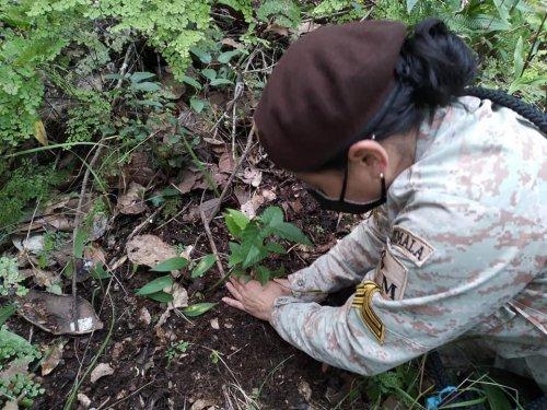 Reforestación contribuye a la recarga hídrica en Aldea el Novillero