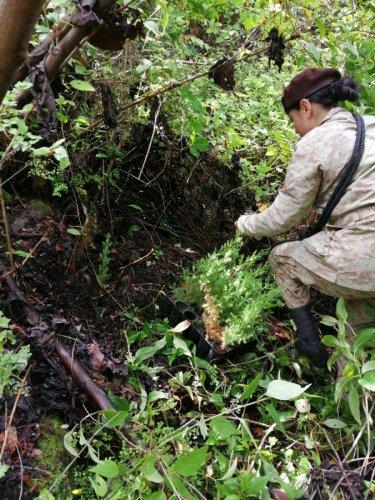 Reforestación interinstitucional contribuye a la cobertura forestal de la Cuenca