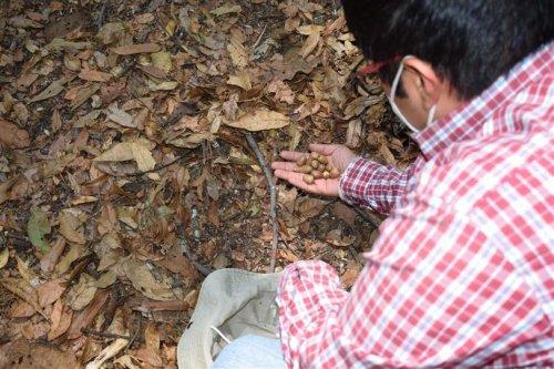 Recolección de semillas nativas de la Cuenca de Atitlán